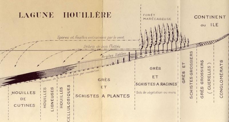 Cordaites Unger , 1850. Img20210