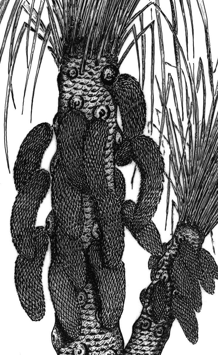 Lepidophloios Sterzel , 1907. Recons10