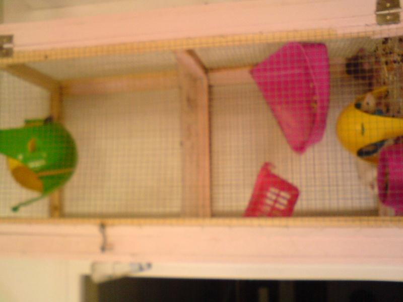 tres grande cage fait main  Dsc00811