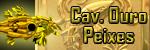 Cavaleiro de Ouro de Peixes NV 248
