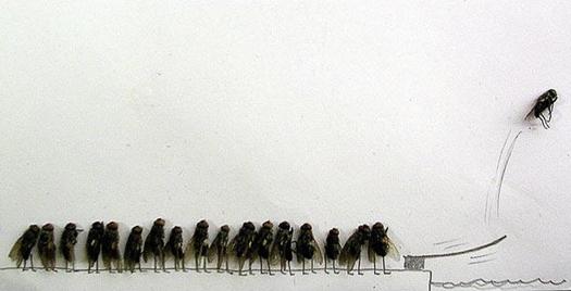 Удивительные мухи 1012