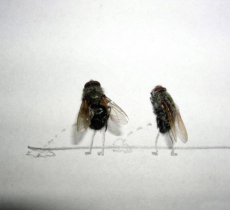 Удивительные мухи 1112