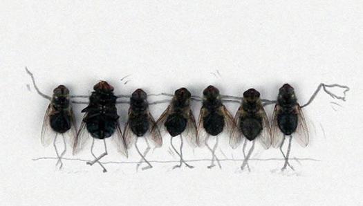 Удивительные мухи 112