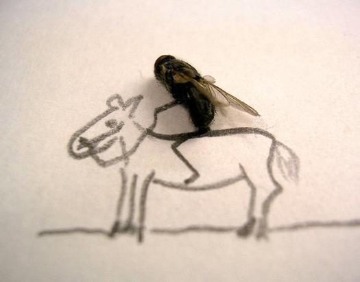 Удивительные мухи 1412