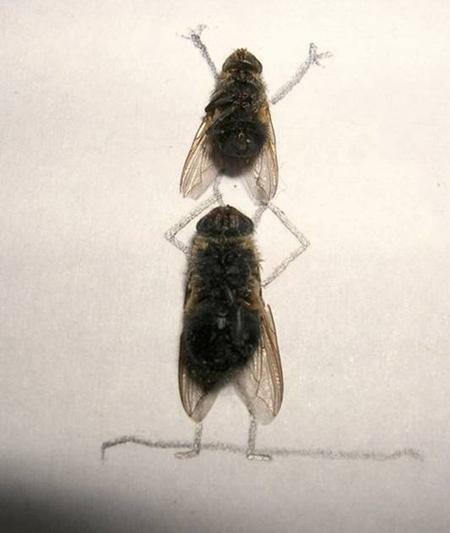 Удивительные мухи 1511