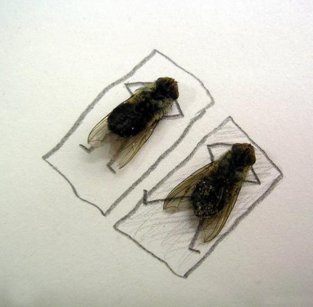 Удивительные мухи 212