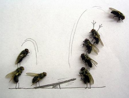 Удивительные мухи 312
