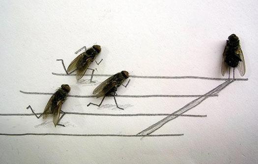 Удивительные мухи 412