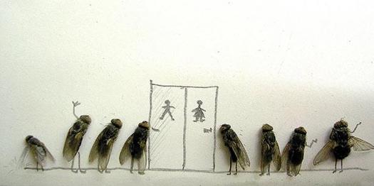 Удивительные мухи 512