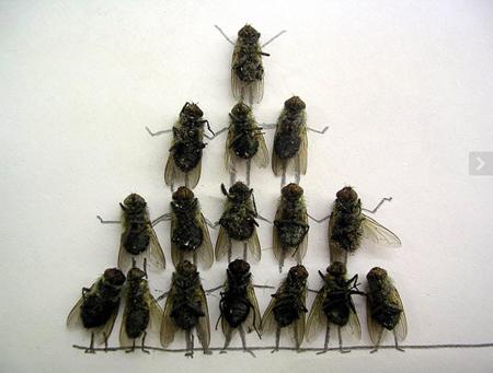 Удивительные мухи 612
