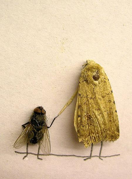 Удивительные мухи 712