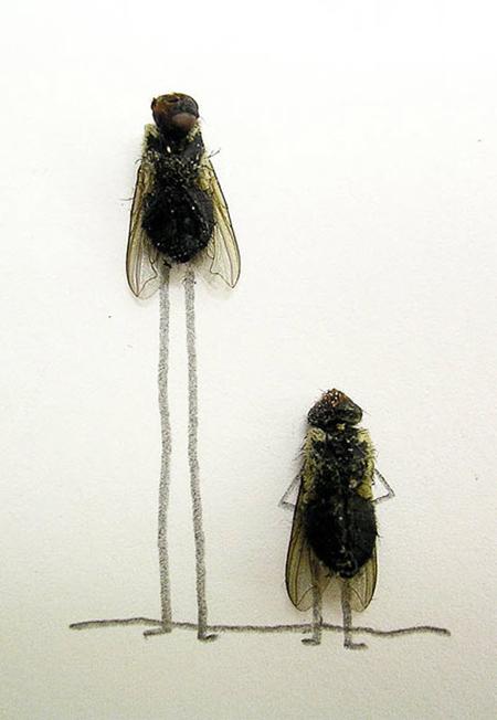 Удивительные мухи 812