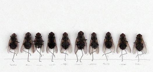 Удивительные мухи 912