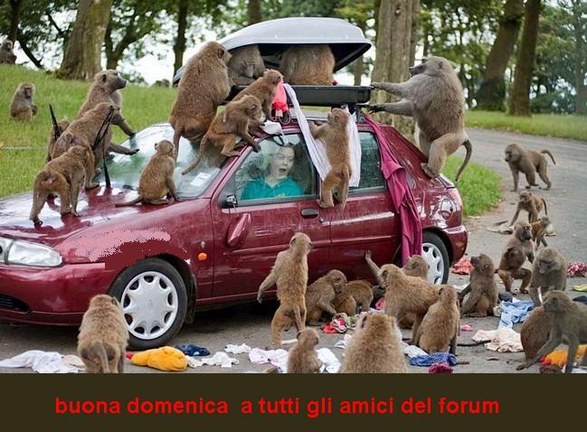 Domenica 5 Giugno 2011 Scimmi10