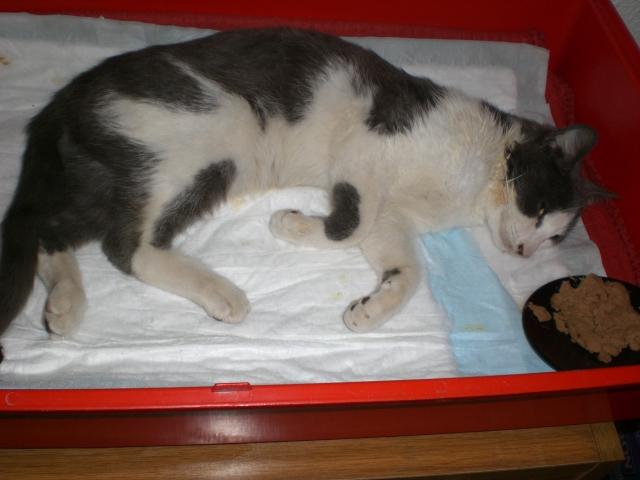 BCN gatito atropellado para difundir, NECESITAMOS PAÑALES Y  Cimg3211
