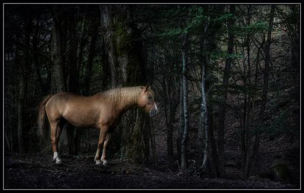 Động vật hoang dã 1011