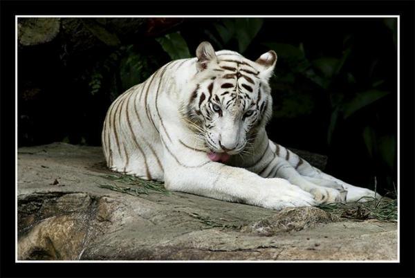 Động vật hoang dã 1411