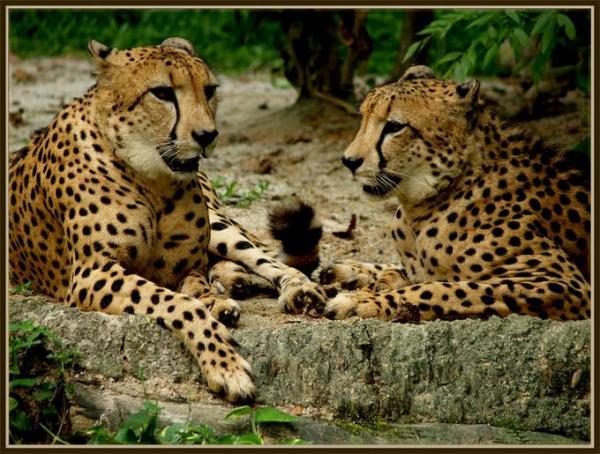Động vật hoang dã 2010