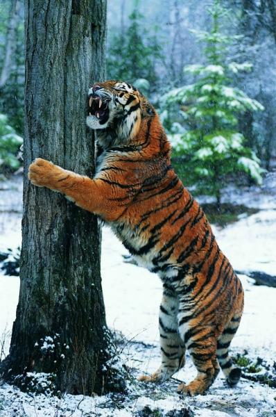Động vật hoang dã 2310