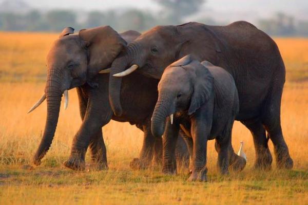 Động vật hoang dã 411