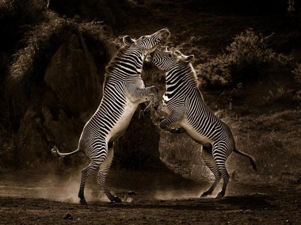 Động vật hoang dã 910