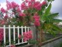 Petite visite de mon jardin Dscn1710