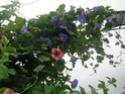 Petite visite de mon jardin Dscn4310