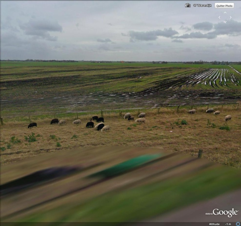 STREET VIEW : Les animaux - Page 4 Mouton10