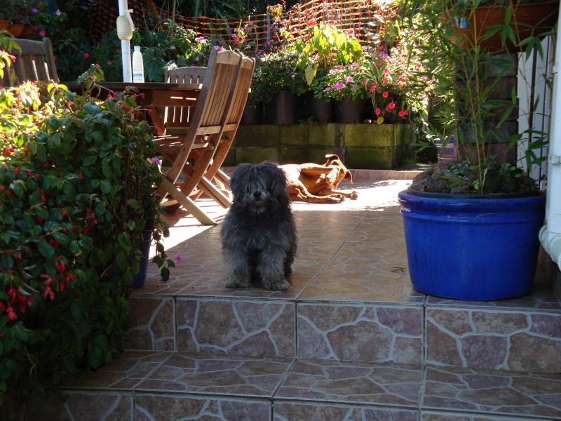 Nos amis les chiens ! Nestor10