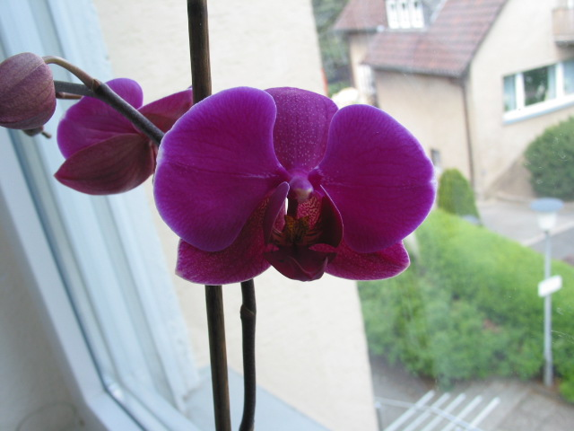 Orchideen - Seite 4 Orchid10