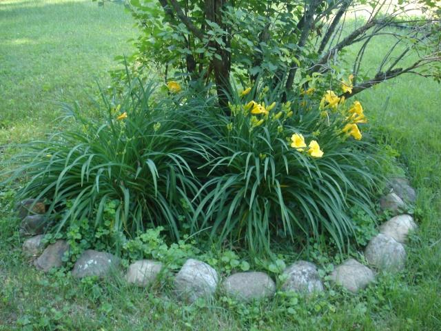 Tori's Gardening Thread? Dsc09012