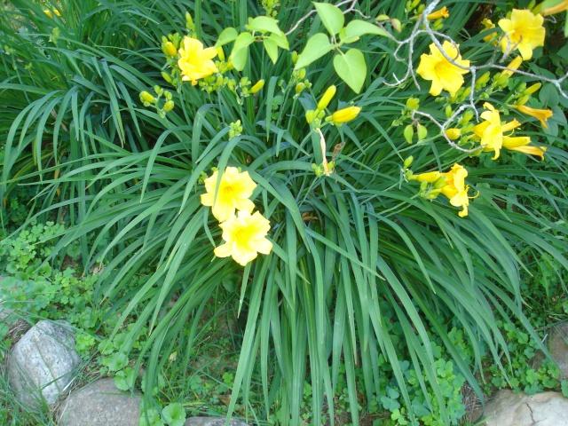 Tori's Gardening Thread? Dsc09013