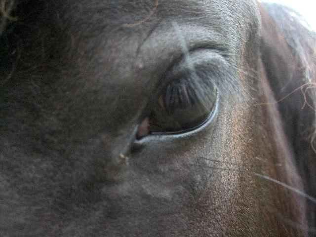 """Concours photo """" oeil de chevaux"""" venez votez ! 11050330"""