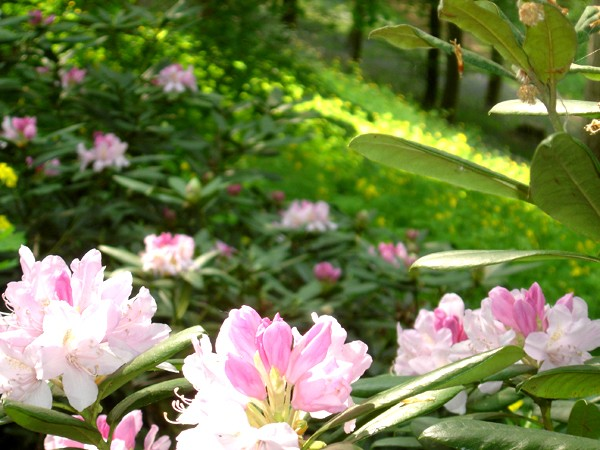 Lub caij paj tawg lawm os lawv aw! ( le retour du printemps/the return of spring)  Dsc08615