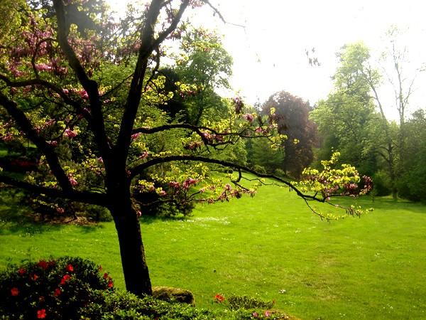 Lub caij paj tawg lawm os lawv aw! ( le retour du printemps/the return of spring)  Dsc08710