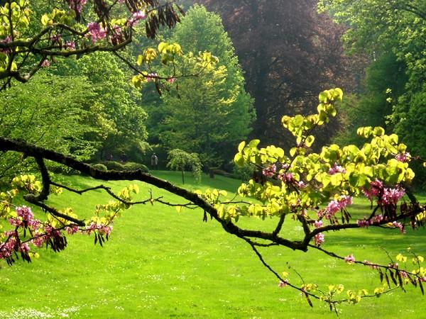 Lub caij paj tawg lawm os lawv aw! ( le retour du printemps/the return of spring)  Dsc08711