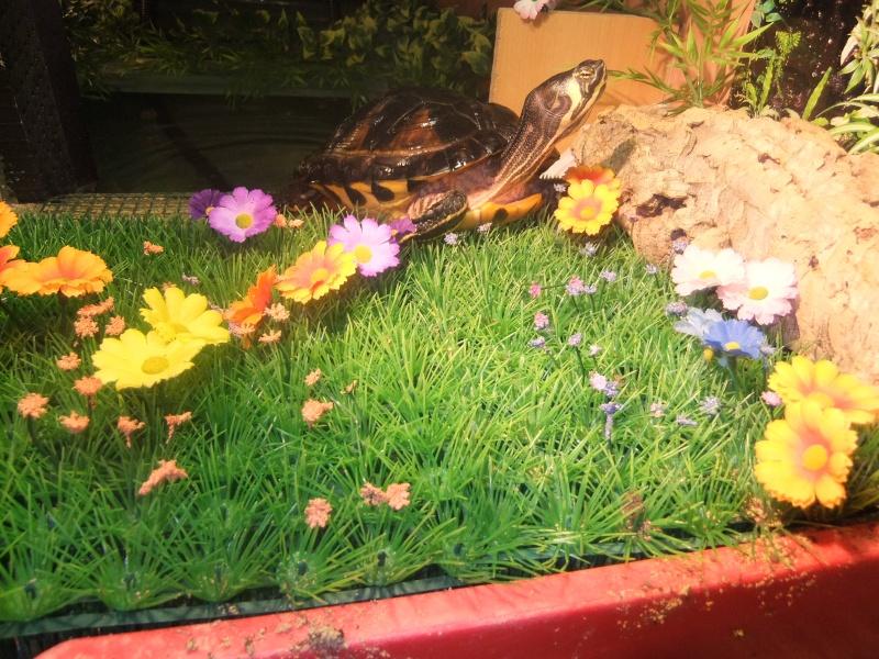Mes tortues (Marjorie) Dscf2027