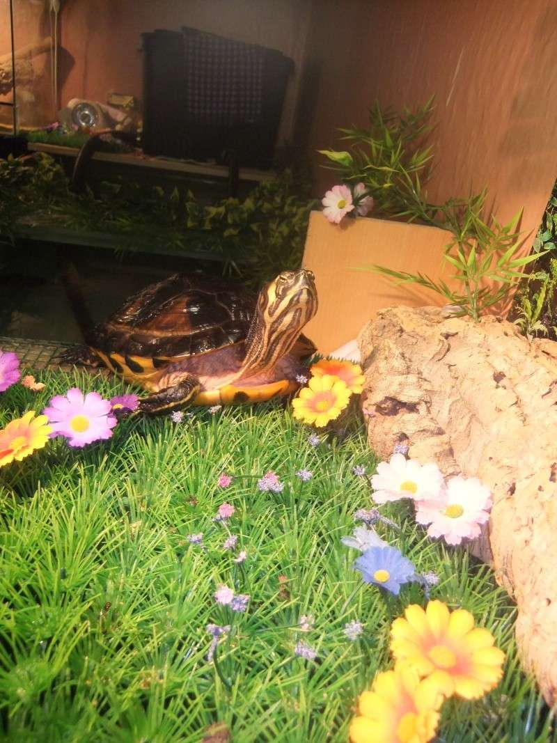 Mes tortues (Marjorie) Dscf2028