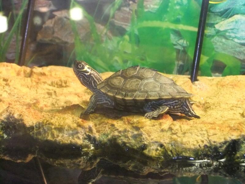 Mes tortues (Marjorie) Dscf2314