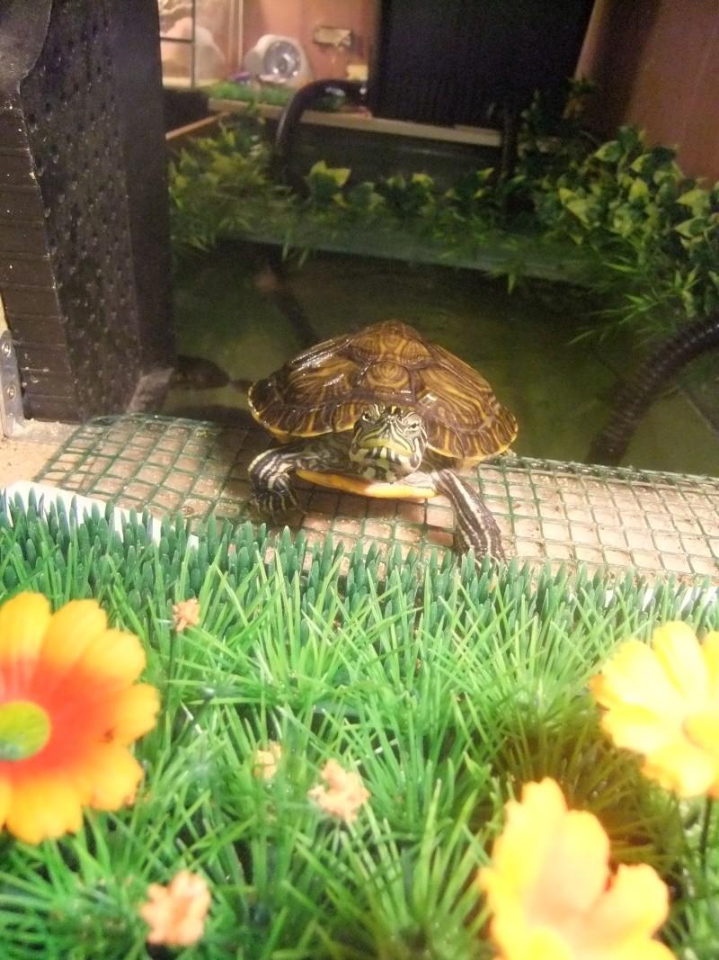 Mes tortues (Marjorie) Dscf2717