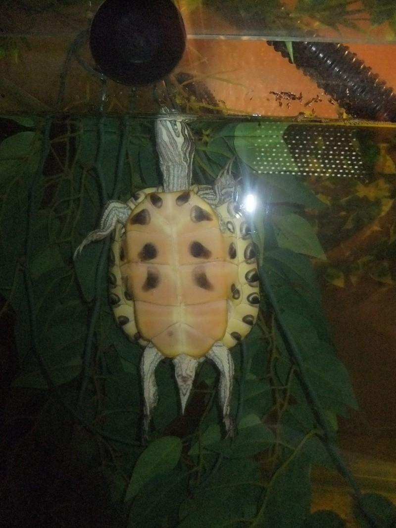 Mes tortues (Marjorie) Dscf2812