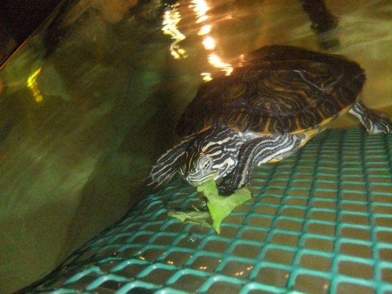 Mes tortues (Marjorie) Dscf2813