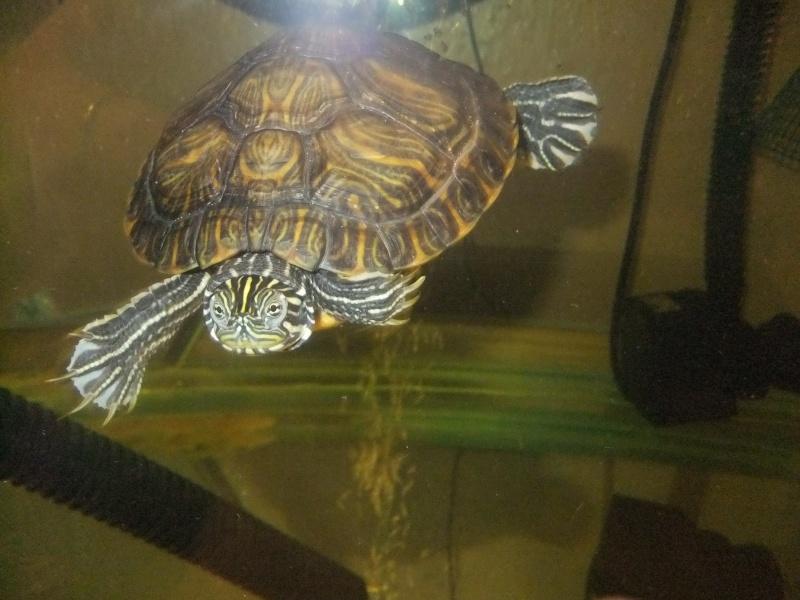 Mes tortues (Marjorie) Dscf2816