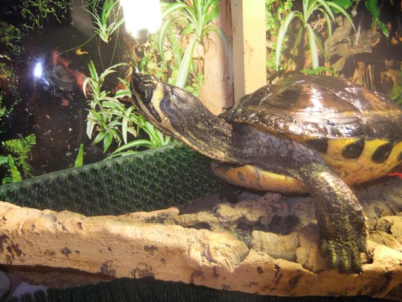 Mes tortues (Marjorie) Dscf2918