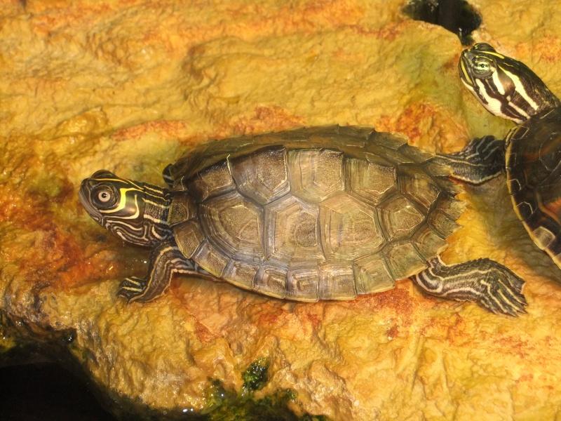 Mes tortues (Marjorie) Dscf3019