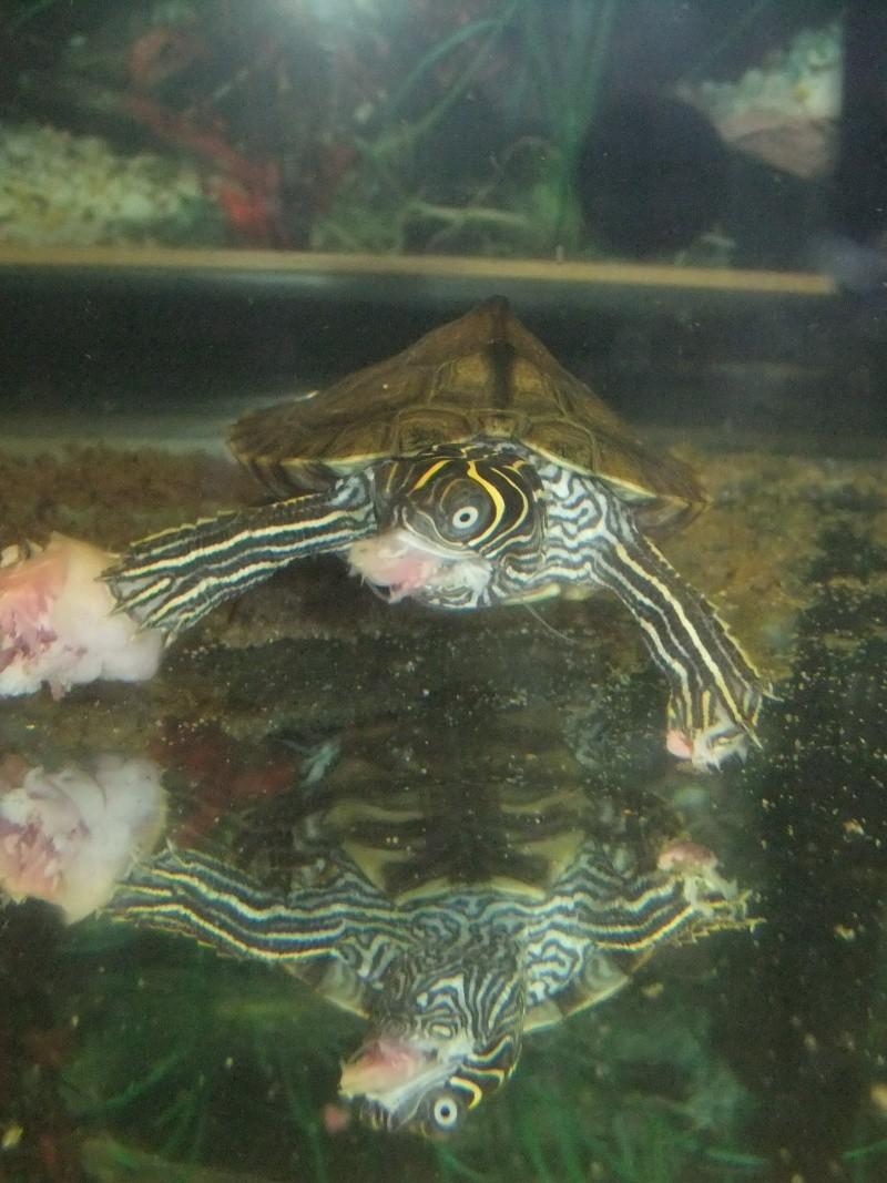 Mes tortues (Marjorie) Dscf3020