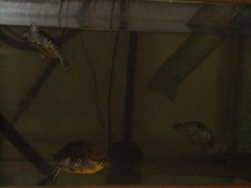 Mes tortues (Marjorie) Dscf3024