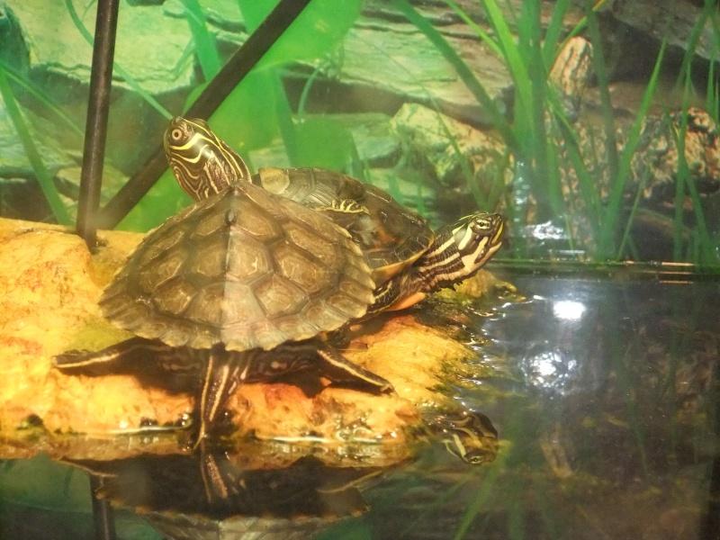 Mes tortues (Marjorie) Dscf3211