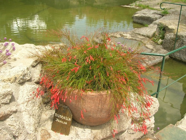Les jardins de Saint-Adrien Jardin24