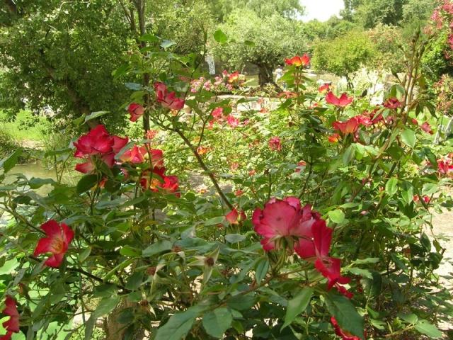 Les jardins de Saint-Adrien Jardin41